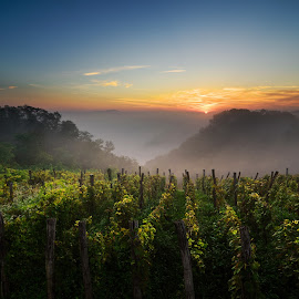 foggy sunrise over the old vineyards by Branko Rod - Landscapes Forests ( clouds, dreamy, rod, vineyard, dawn, dream, croatia, agriculture, sunrise, morning, branko )