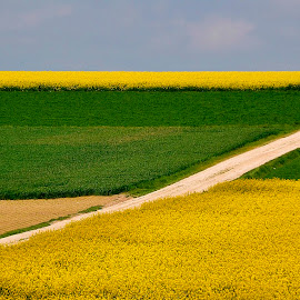Z by Szalai Katalin - Landscapes Prairies, Meadows & Fields ( sky, blue, green, yellow, szalaikatee, z, rape, fields,  )