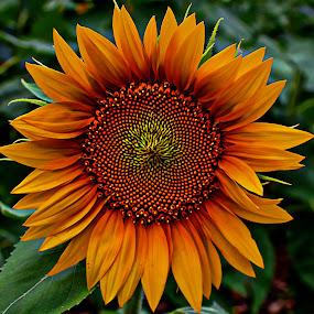 by Karen McKenzie McAdoo - Flowers Single Flower