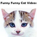 Funny Funny Cat Videos APK Image