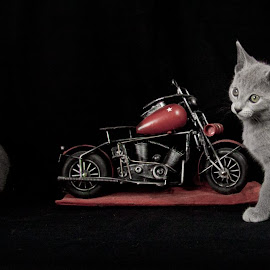 Mother, Child and a toy by Aleksander Cierpisz - Animals - Cats Kittens