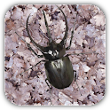 Rhinoceros beetle Wallpaper icon