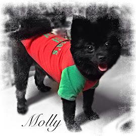 Molly by Eva Kirkman - Typography Captioned Photos