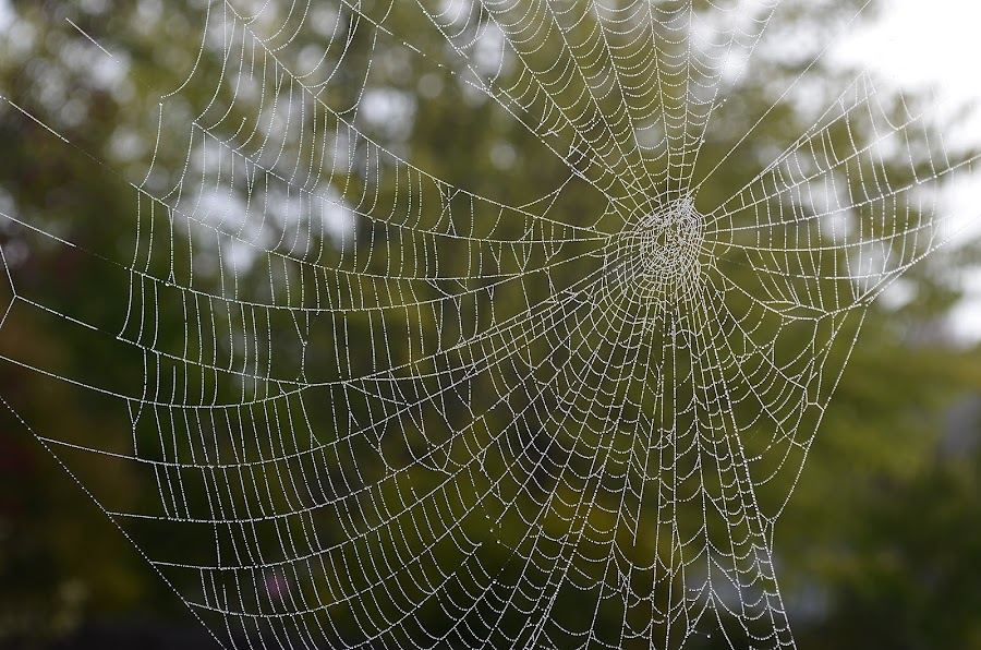 Good Morning Boys And Ghouls by Ed Hanson - Nature Up Close Webs ( nature, dew, spider, web, close-up )