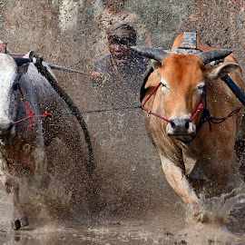 Maximum Power by Maizal Chaniago - Sports & Fitness Rodeo/Bull Riding