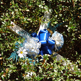 Flowers in a Bush  by Lorie  Carpenter  - Nature Up Close Trees & Bushes ( nature, blue, white, bush, flowers )