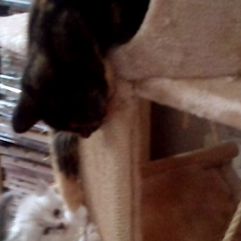 How did you get up there? by Lyz Amer - Animals - Cats Kittens ( cat, kitten )