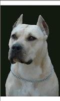 Screenshot of Perros.Todas las razas y fotos