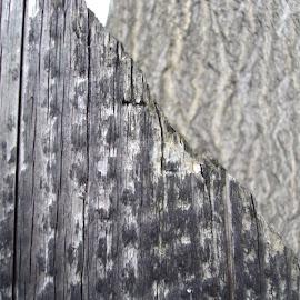 Lines & Brown & Gray by Kmetica Vesela - City,  Street & Park  Neighborhoods ( fence, wooden, tree, pattern, wood, lines, grey, brown, interesting, photo,  )
