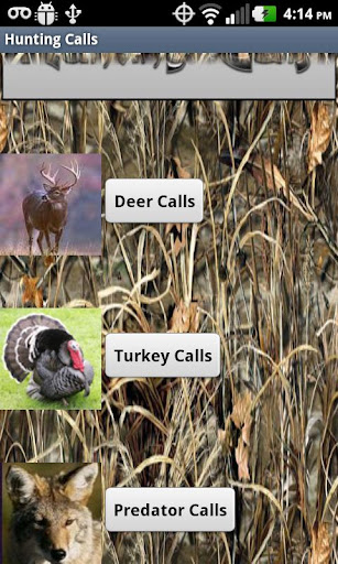 HD Deer Turkey Predator Calls