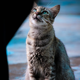 meru by Eddy Ahmad - Animals - Cats Portraits ( blogger, kitten, meow, n9, cutecandid )