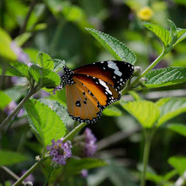Love is a peaceful feeling, like a flower hugging a Butterfly by Vinay Jani - Animals Other