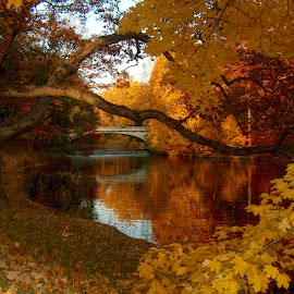 Autumn, Vanderbilt Mansion, Hyde Park, NY. by John Hayes - Landscapes Travel