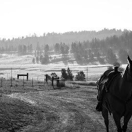 End of the Day by Jeremy Solesbee - People Street & Candids ( picasa, montana, facebook, fiona, trip, road, kristen )