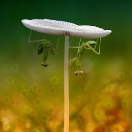 both under the mushroom by Fatriyanto Mooduto - Nature Up Close Mushrooms & Fungi