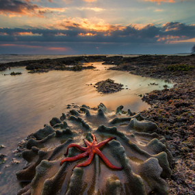 Beach flower by Gus Mang Ming - Landscapes Beaches