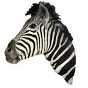 Zebra Head Sticker icon