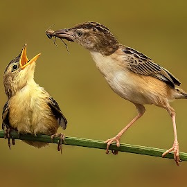 Lunch Time by Roy Husada - Animals Birds