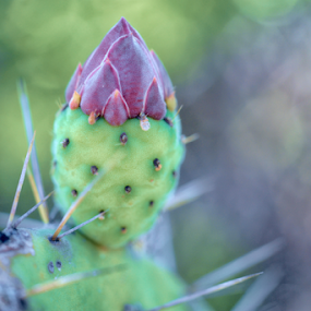 Cactus by Cristobal Garciaferro Rubio - Nature Up Close Other plants ( cactus )