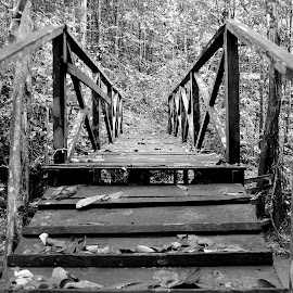 Bridge by Sly Sam - Novices Only Objects & Still Life ( structure, b&w, wood, outdoor, forest, bridge )