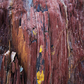 Rock Patterns Ballymoney by Christiaan Partridge - Nature Up Close Rock & Stone ( lines, beach, rock formation, colours, lichen )