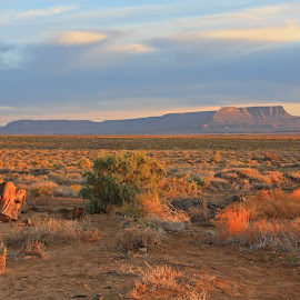 Karoo Desert by Ashley Crookes - Landscapes Deserts ( plant, mountain, desert, afternoon, cape, south africa, wildlife, arid, landscape, karoo, wilderness, national park, nature, sunset, tankwa, cloud, scenery, africa, sparse,  )