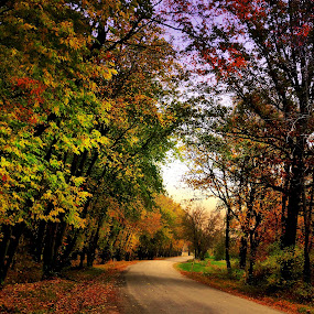 Forest Road by T Sco - Landscapes Forests ( autumn, trail, fall, path, trees, forest, road )