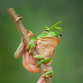 Holdin' on to you by Aditya Permana - Animals Amphibians