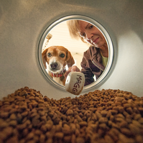 Breaking Rules: A different Point of View by Lorella Johnson - Animals - Dogs Portraits ( dog beagle food feed scoop )