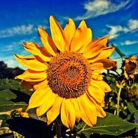 IMG_1355_edited_edited.jpg