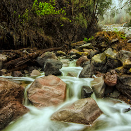 Sulfur River by Amyn Akbarinzyach - Landscapes Forests