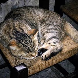 Shhhhh Kitty Sleeping! by Helen Roberts - Animals - Cats Portraits (  )