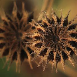 by Wartono Kumpulono - Nature Up Close Other plants