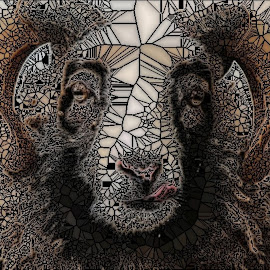 Sheep in Glass by Roxanne Dean - Abstract Patterns ( abstract, patterns, sheep, lines, geometric,  )