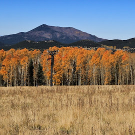 by Gordon Reeder - Landscapes Mountains & Hills ( fall, color, colorful, nature,  )