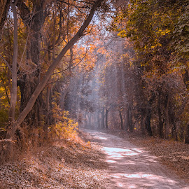 Sun rays by KP Singh - Landscapes Forests ( migratory, pattan, punjab, wetland, harike )