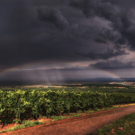 rainbow over the vineyards ... by Joseph Muller - Landscapes Weather ( vineyard, rainbow,  )