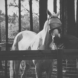 by Krista McMullen - Animals Horses ( vscocam )