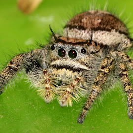 spider by John Haney - Animals Insects & Spiders ( macro, bug, spider, insect, eyes,  )