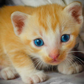 deep blue by Tareq Touhid - Animals - Cats Kittens (  )