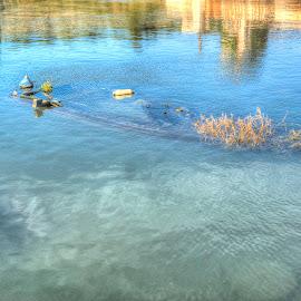 Barque by Danijel Andreas Ivanek - Digital Art Things ( water, macro art, macro, waterscape, macro photography, macro shot )