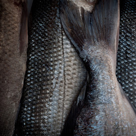 fish, food, sea, Croatia, fresh fish by Stefan Mihailovic - Food & Drink Meats & Cheeses