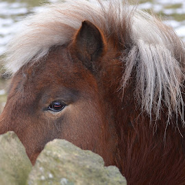 by John Wiseman - Animals Horses
