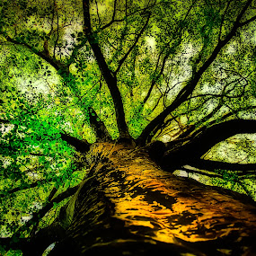 grow.... by Tanya Popove - Nature Up Close Trees & Bushes ( ancient, spiritual, tree, beech, growth )