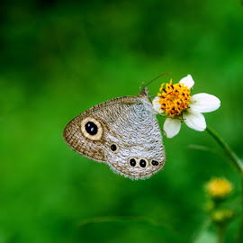 Butterfly by Karthik Sa - Nature Up Close Other Natural Objects ( butterfly, nature, green )