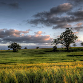 Summer by Kim  Schou - Landscapes Prairies, Meadows & Fields ( clouds, hdr, vesterborg, trees, lolland, fields )