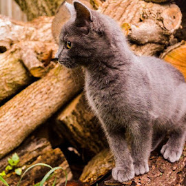 by Robins Thomas - Animals - Cats Kittens