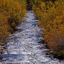 Mountain Stream by Bill Shumard - Nature Up Close Trees & Bushes