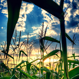good morning corn by Todd Reynolds - Nature Up Close Other plants