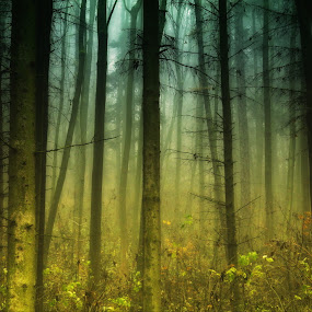 A foggy wood.jpg